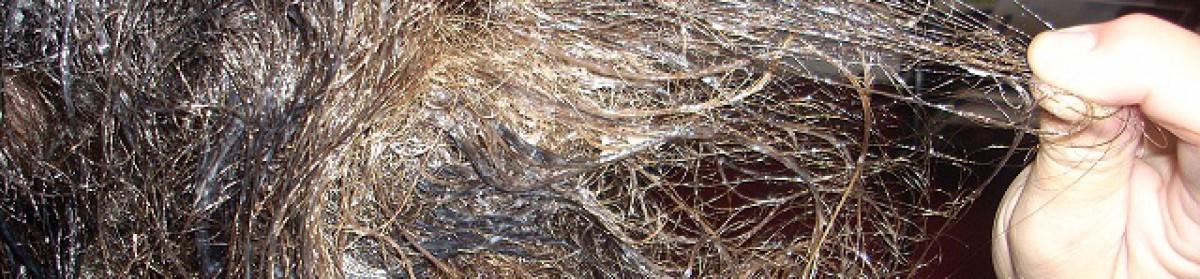 Tangled Hair Techs Detangle Coupons
